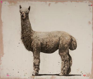 David Morago, 'Alpaca', 2019