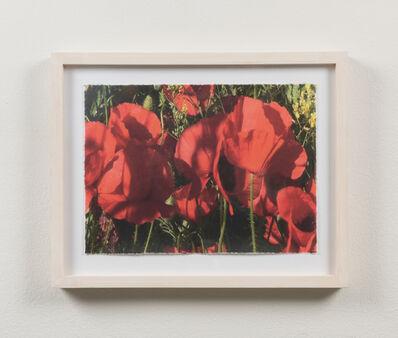 Eva Koch, 'Poppies #10', 2015