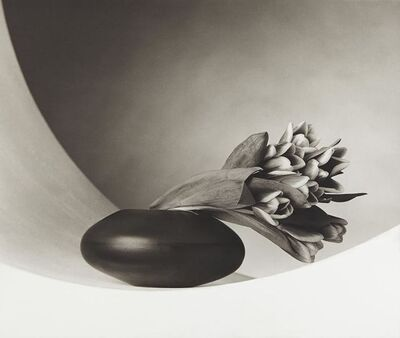 Robert Mapplethorpe, 'Tulips ', 1987