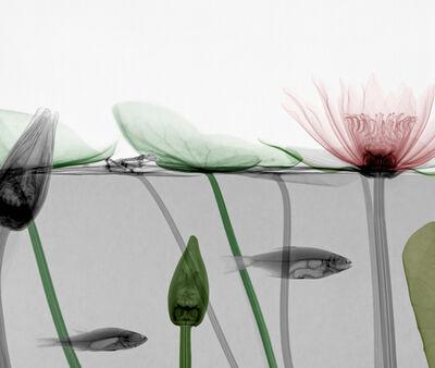 Arie van 't Riet, 'Roach Waterlily'