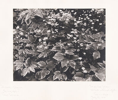 Paul Strand, 'The Garden, Orgeval [France]', 1956