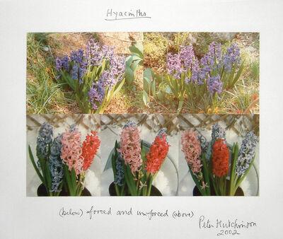 Peter Arthur Hutchinson, 'Hyacinths', 2002