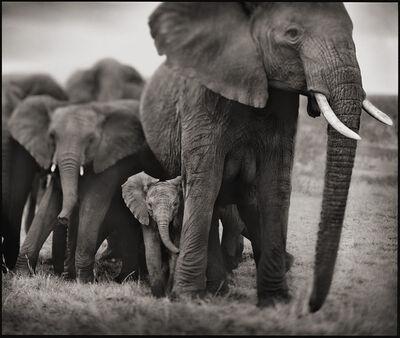 Nick Brandt, 'Elephant Mother & Two Babies, Serengeti', 2002