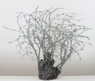 Abdul Rahman Katanani, 'Olivie Tree 2', 2016