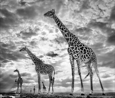 David Yarrow, 'Keeping Up With the Crouch's', 2019