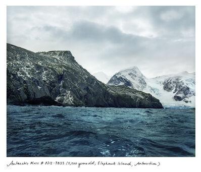 Rachel Sussman, 'Antarctic Moss'
