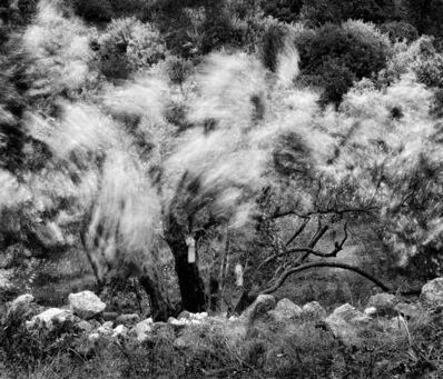 David Magee, 'Olive Grove   Milos Greece', 1998
