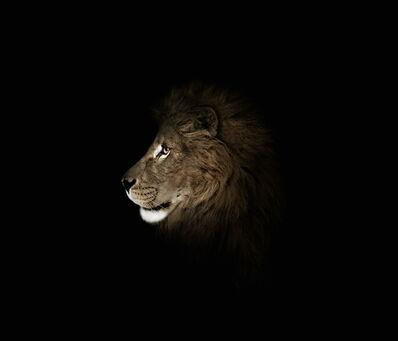 Michael Duva, 'Lion Profile', 2010