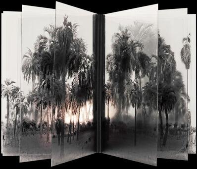 Jacques Bedel, 'Palmeras - Ad Infinitum', 2013
