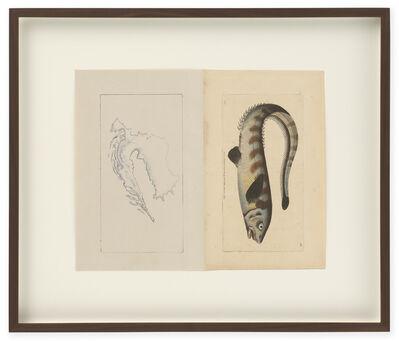 Anri Sala, 'Untitled (Croatia / Notocanthus Nasus)', 2014