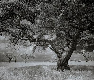 Anton Lyalin, 'Portrait of Africa #102', 2001-2018