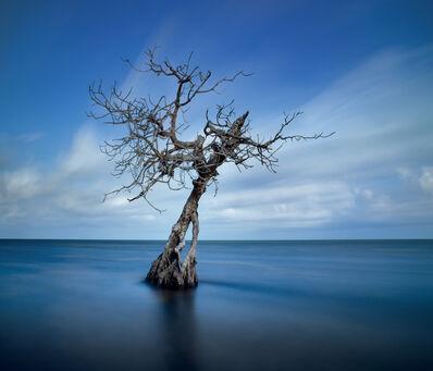 David Magee, 'Symphony in Blue, Long Key, Florida', 2019