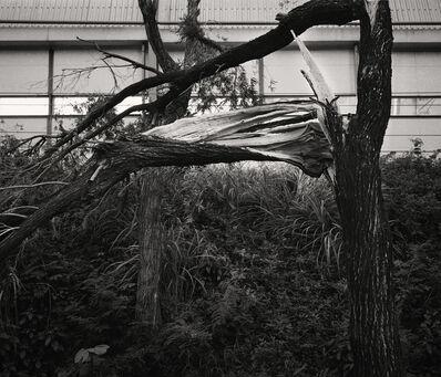 South Ho Siu Nam 何兆南, 'Whiteness of Trees I', 2018