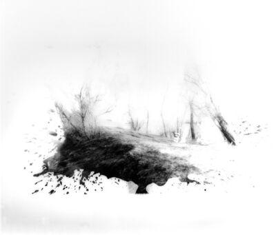 Fares Jammal, 'Insights Into Nature', 2014