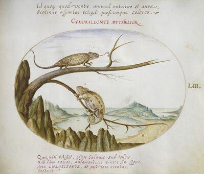 Joris Hoefnagel, 'Animalia Qvadrvpedia et Reptilia (Terra): Plate LIII', ca. 1575/1580