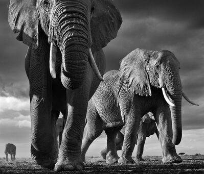 David Yarrow, 'Big, Amboseli, Kenya', 2012