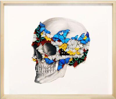 SN, 'Left Skull ', 2019