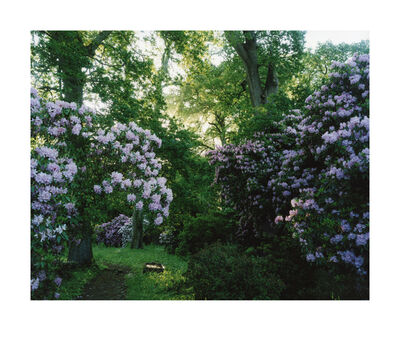 Harry Cory Wright, '1476. Rhododendron. Morning', 2015