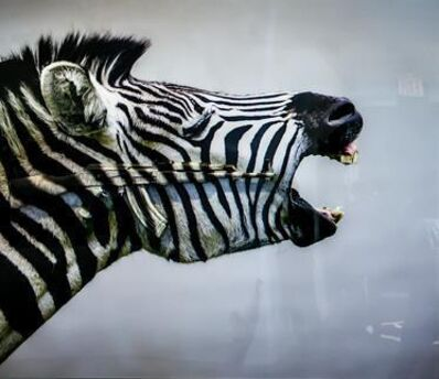 Carl Mccrow, 'Screaming Zebra ', 2018
