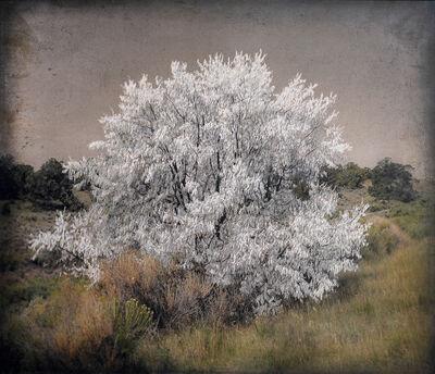 Kate Breakey, 'Pale Tree, New Mexico  '