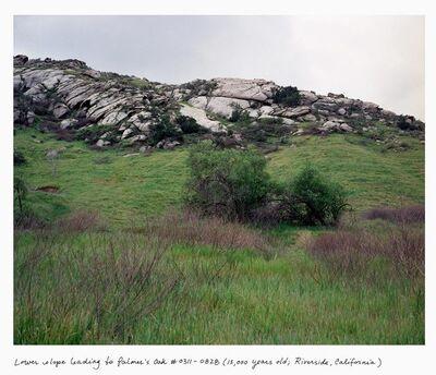 Rachel Sussman, 'Palmer's Oak #0311-0828 (13,000 years old; Riverside, California)', 2011