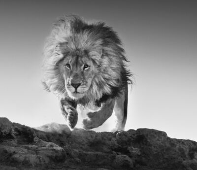 David Yarrow, 'Hairspray ', 2017