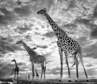 David Yarrow, 'Keeping Up With The Crouches', ca. 2019