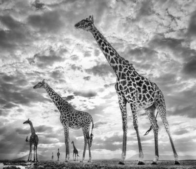 David Yarrow, 'Keeping Up with the Crouches, Amboseli, Kenya', 2019