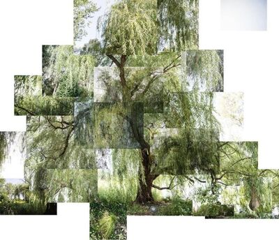 Terry Evans, 'Willow', 2018