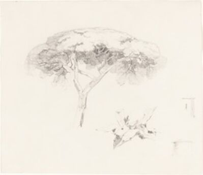 Edward Lear, 'Umbrella Pine and Other Studies', 1839/1845