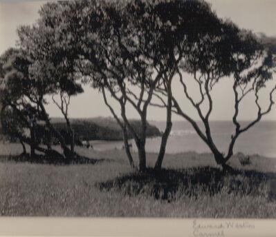 Edward Weston, 'Carmel, Trees', ca. 1940