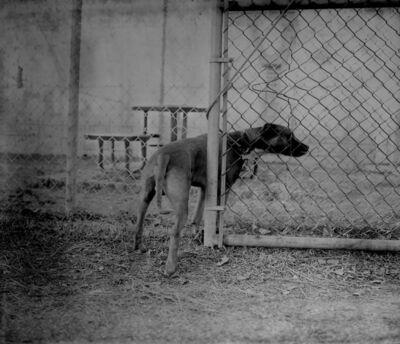 Raymond Meeks, 'Companion Animal #688', 2015