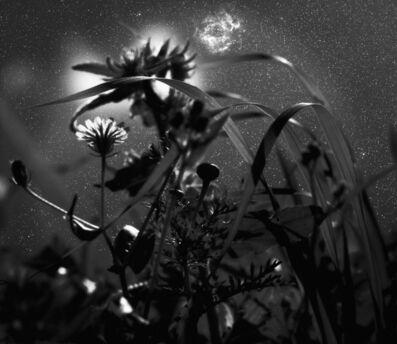 Neil Folberg, 'Rosette Nebula', 2001