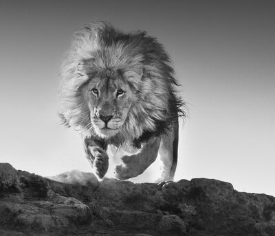 David Yarrow, 'Hairspray', 2017