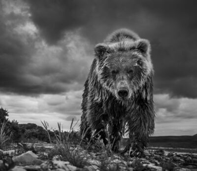 David Yarrow, 'Funnel Creek, Alaska', 2016