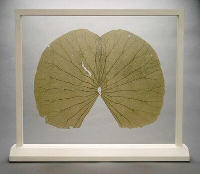Gabriel Orozco, 'Lotus Leaves (Full Leaf)', 2004