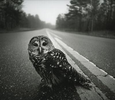 Arthur Tress, 'Owl on Road, Big Thicket, Texas', 1975