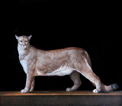 Patricia Traub, 'Saved Mountain Lion', 2017