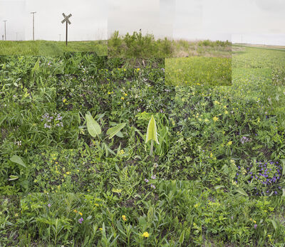 Terry Evans, 'Central Illinois Prairie, May ', 2018