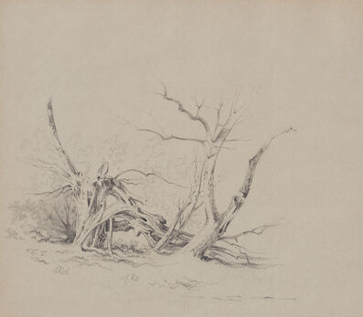 Xanthus Russell Smith, 'Study of Old Tree Trunks'