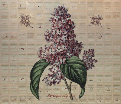 Jacques Payette, 'Syringa vulgaris', 2018