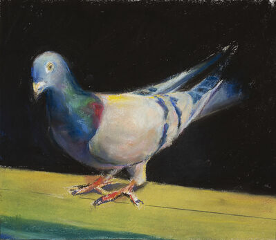 Paul Richards, 'Pigeon', 2019