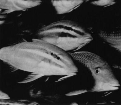Nancy Burson, 'Happy Fish', 1983