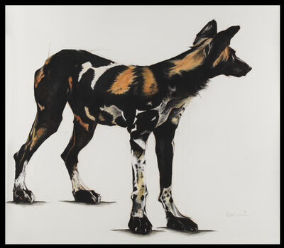 Rose Corcoran, '28. Large African Wild Dog IV'