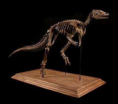 Natural History, 'Theo', Circa 84 Million Years Old