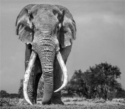 David Yarrow, 'Colossus, Amboseli, Kenya', 2018