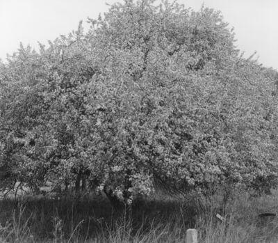 付 羽, '百花树 Trees with Hundreds of Flowers', 2017