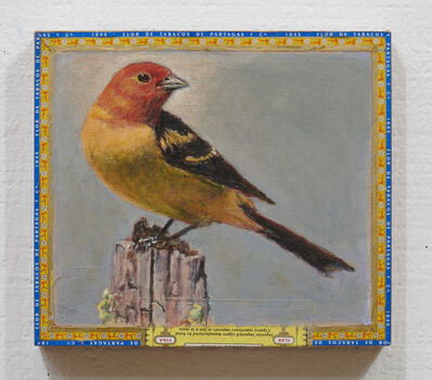 Ed Musante, 'Western Tanager / Partagas', 2019
