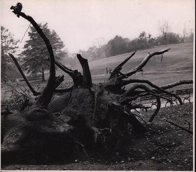 André Kertész, 'Central park', 1944