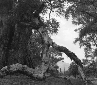 付 羽, '大树 Big Tree', 2016